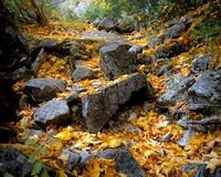 Leaves blanket the granite rocks on the path to Upper Yosemite Falls.